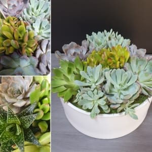 Potted Succulent Garden Bowl