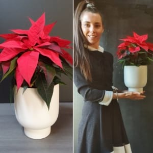 Poinsettia in Ceramic
