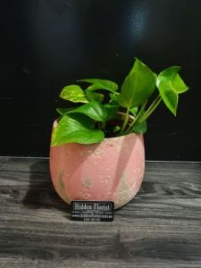 Devils` Ivy Teal Earth Ceramic Pot