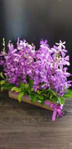 Vanda / Mokara Orchid Timber Box